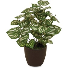 FST 27214 First Base Elementals Watermelon Peperomia Plant FST27214