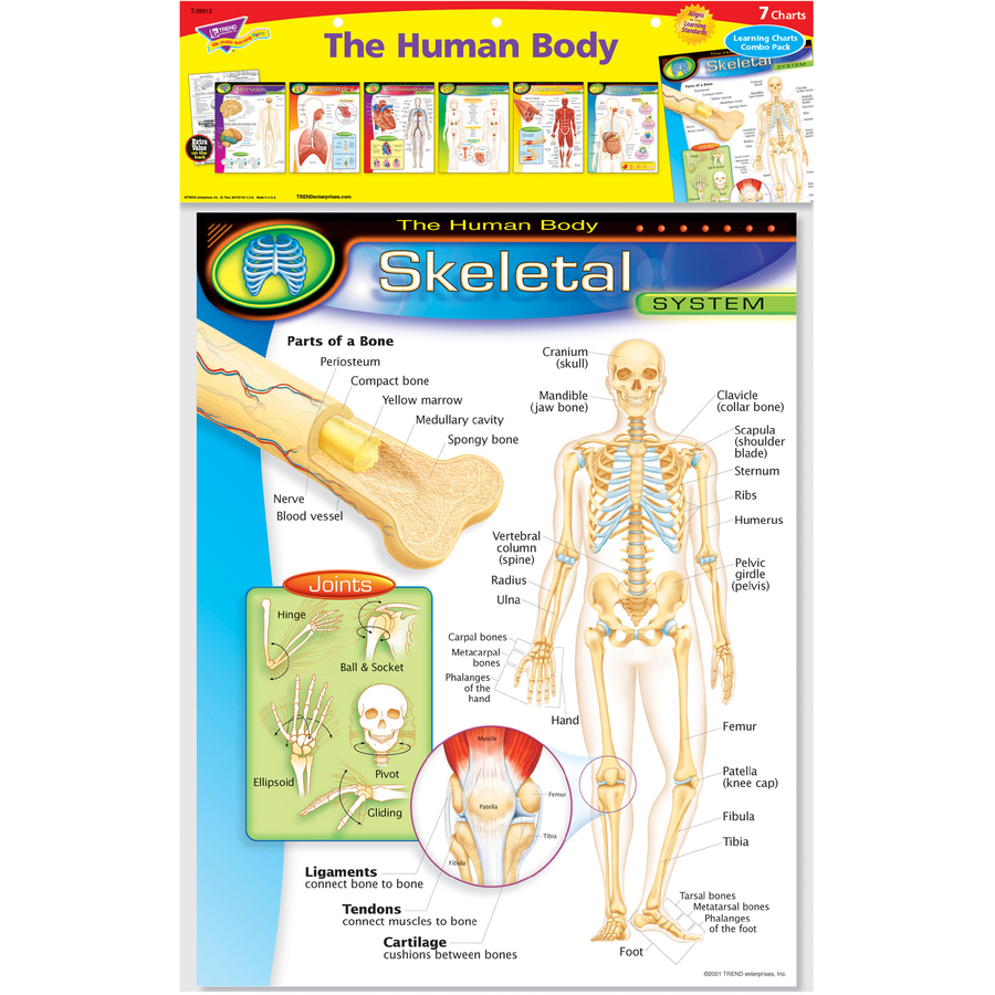 Trend The Human Body Chart Pack Office Church School Supply Co Inc
