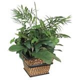 Nu-Dell Large Green Potted Plant - Mixed - Green, Ash