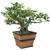 Nu-Dell Mini Potted Tree - Bonsai - Seagrass