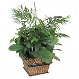 Nu-Dell Medium Green Potted Plant - Mixed - Seagrass