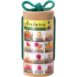 Primula Flowering Tea
