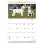 At-A-Glance Large Puppies Monthly Wall Calendar AAGDMW16728