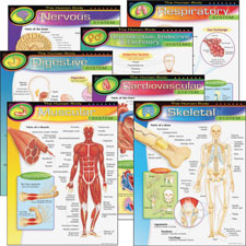 "The human body charts, 17""x22"", multicolor, sold as 1 package, 6 each per package"