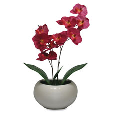 "Moth orchid fuchsia plant, silk leaves, 5"" pot, purple, sold as 1 each"