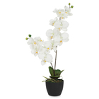 """Exponent Microport White Orchid - 24"""" (609.60 mm) Tall - Orchid - White - 1 Each"""