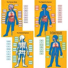 CDP 110178 Carson Human Body Bulletin Board Set CDP110178