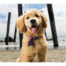 FEL 5916401 Fellowes Recycled Mouse Pad - Puppy at Beach FEL5916401