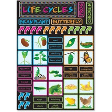 ASH77100 - Ashley Life Cycles Mini Bulletin Board Set
