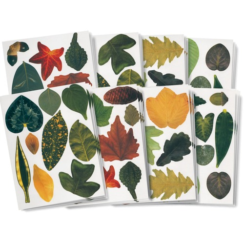 """Roylco Crafty Leaves - Poster, Craft - Recommended For 4 Year - 8.50"""" (215.90 mm)Width x 11"""" (279.40 mm)Length - Leaves Printed - 266 / Pack"""