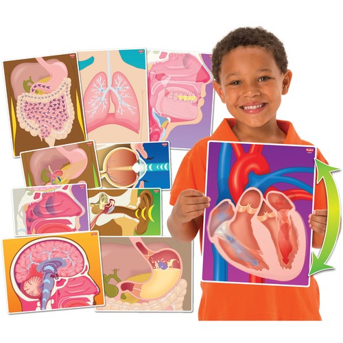 Roylco Learning Card - Theme/Subject: Learning - Skill Learning: Human Body, Organ - 10 Pieces - 4+ - 10 / Pack