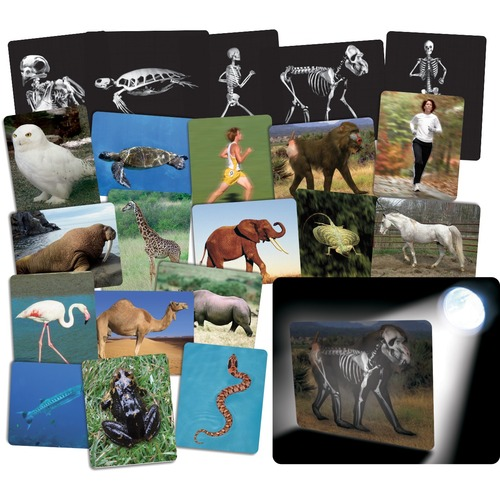 Roylco Learning Card - Theme/Subject: Learning - Skill Learning: Anatomy - 4+ - 16 / Pack