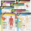 """Trend The Human Body Chart Pack - 17"""" Width x 22"""" Height - Assorted"""
