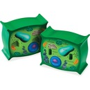 Learning Resources Cross-section Plant Cell Model