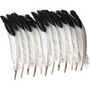 Creativity Street Imitation Eagle Feathers