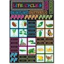 Ashley Life Cycles Mini Bulletin Board Set