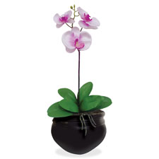 """""""Artificial Orchid Plant, 6"""""""", Pink/White"""""""